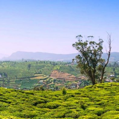 Luxury Holidays in Tea Plantations and Coastal Hideaways