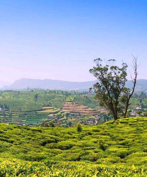 Luxury Holidays in Tea Plantations and Coastal Hideaways