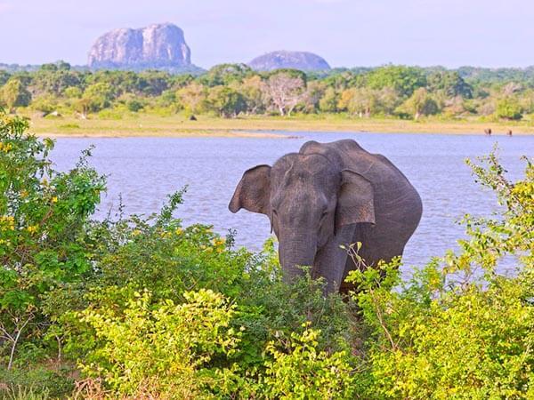 Elephant Rock & Elephant