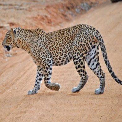 Luxury Wild Holidays Sri Lanka