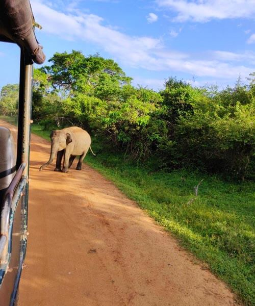 Private Day Tour to Yala National Park