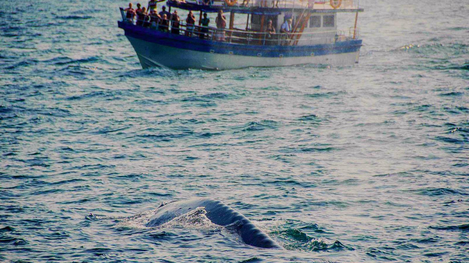 Whale and Dolphin Watching Sri Lanka